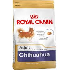 chiahuahua-adult
