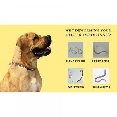 Heartgard Plus xổ giun cho chó an toàn và hiệu quả