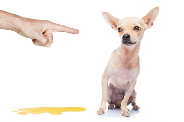 Thuốc xịt cho chó đi vệ sinh đúng chỗ là gì?