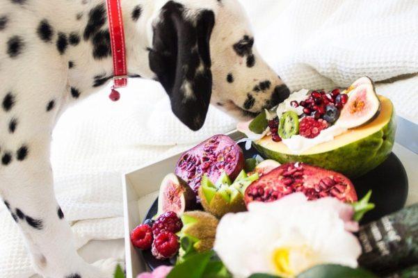 Dinh dưỡng cần thiết cho chó mà bạn cần nắm rõ?
