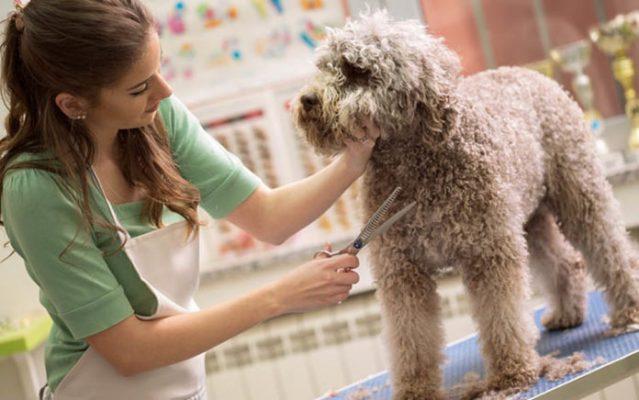 Spa chó mèo – Dịch vụ làm đẹp thú cưng chuyên nghiệp