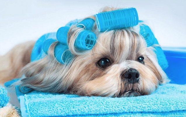 Địa chỉ Spa cho thú cưng uy tín và chuyên nghiệp tại TP HCM