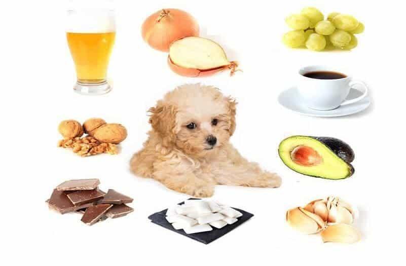 Lưu ý khi chọn thức ăn cho cún yêu