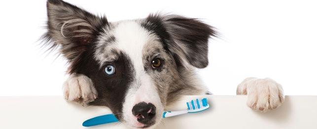 Thức ăn có gây ảnh hưởng đến răng miệng của thú cưng hay không?