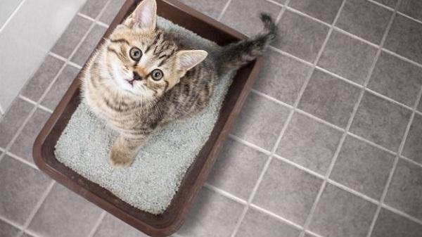Cát vệ sinh cho mèo loại nào tốt? Mua ở đâu giá rẻ?
