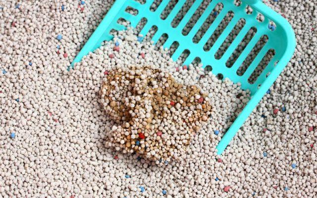 Những loại cát khô vê sinh cho mèo tốt nhất