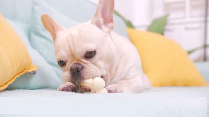Những loại bánh thưởng có tại Happy Paws Pet Shop