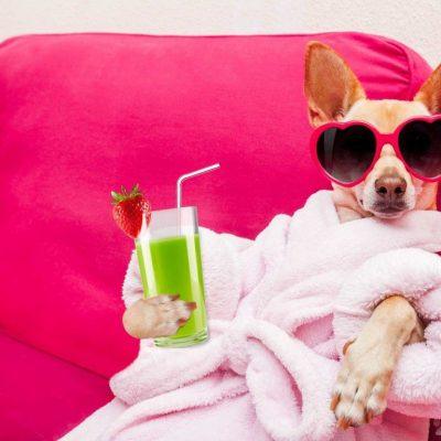Cách tắm cho chó luôn sạch sẽ thơm lâu như đi spa mà bạn nên biết?