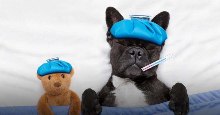 Cách sổ giun an toàn tại nhà dành cho chó?
