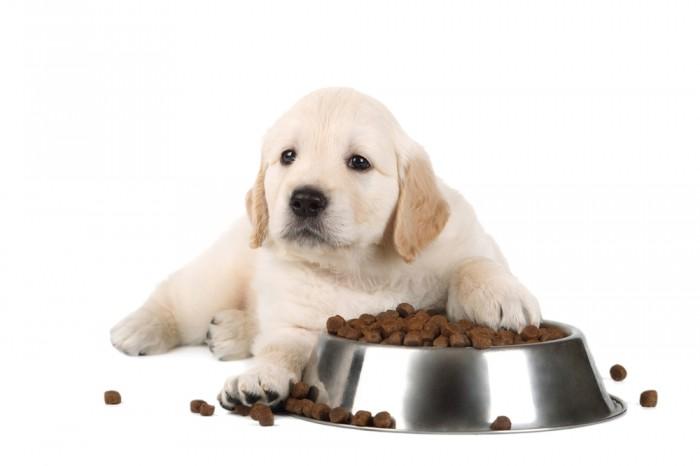Thức ăn hạt khô cho chó được yêu thích nhất hiện nay?