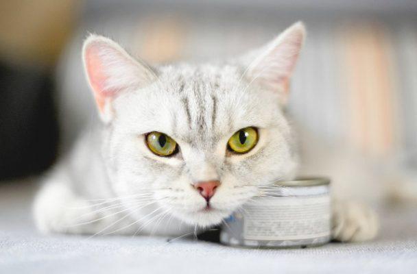 Vai trò của taurine đối với sức khỏe mèo?