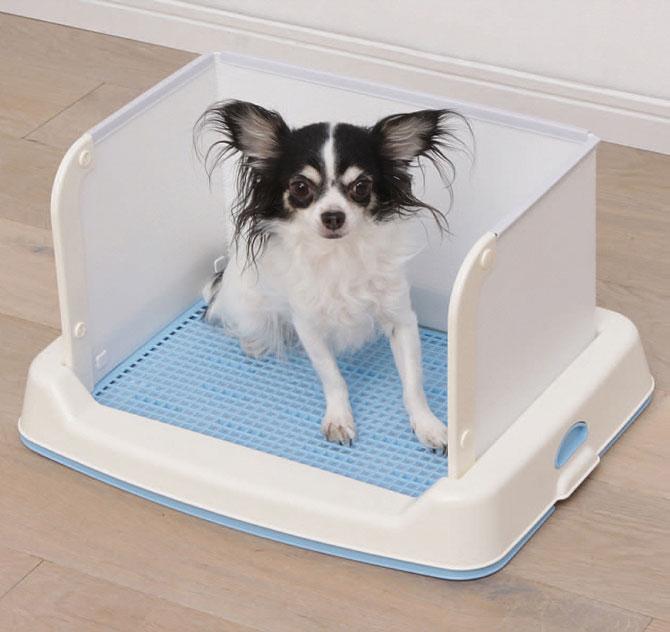 Bán khay vệ sinh cho chó ở đâu? Nên mua loại nào?