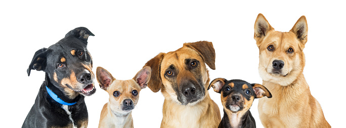 5 nguyên nhân góp phần làm giảm tuổi thọ ở chó