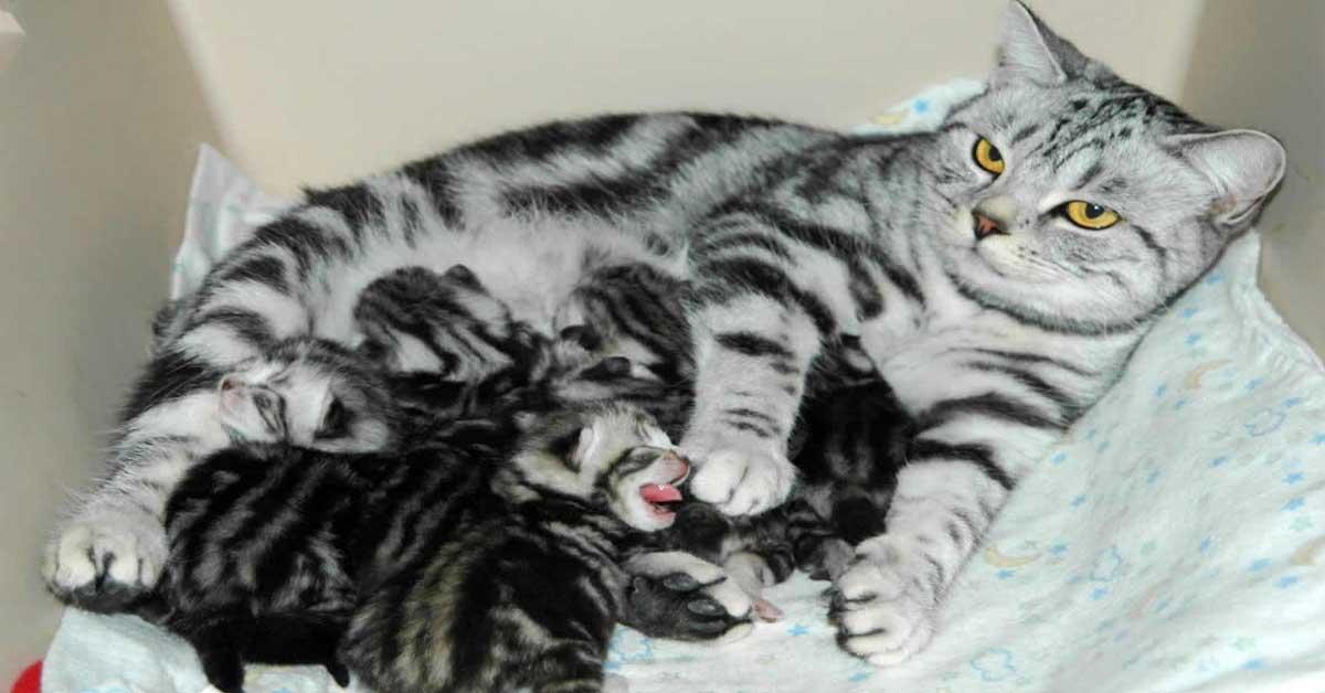 Những sản phẩm nên sử dụng cho mèo đang mang thai