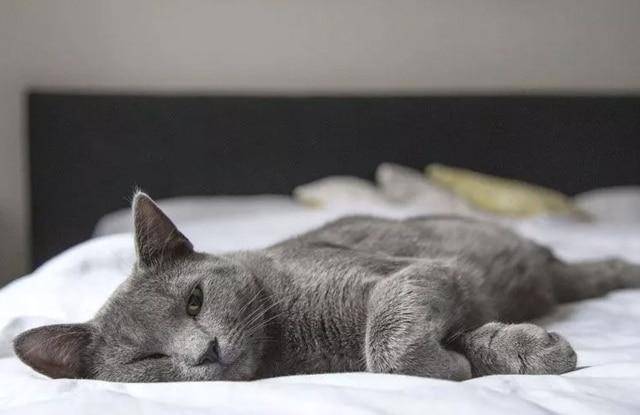 Tại sao mèo lại ngủ nhiều?