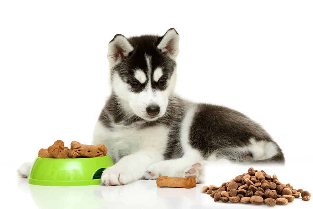 Tất tần tật các dòng thức ăn cho chó Royal Canin dạng hạt khô