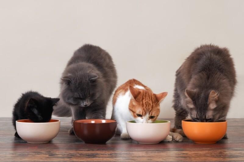 Thương hiệu thức ăn cho chó mèo Natural Core có tốt không?