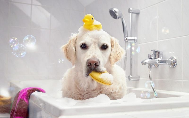 Sữa tắm cho chó loại nào tốt? Mua sữa tắm cho chó ở đâu?