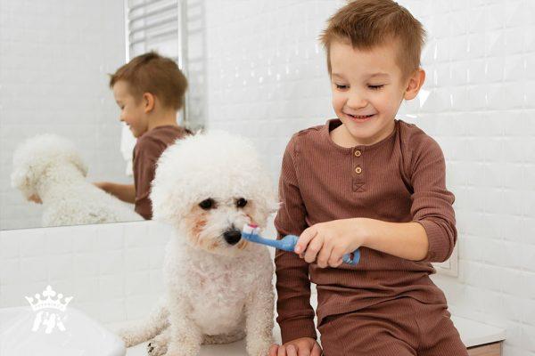 Tại sao phải vệ sinh răng miệng cho chó?