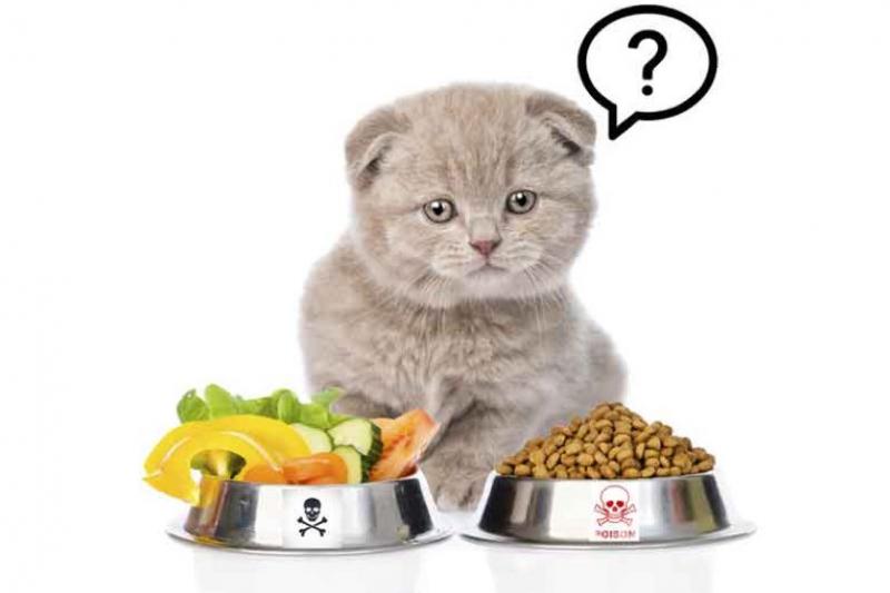 Bạn nên cho mèo ăn bao nhiêu thì đủ ?