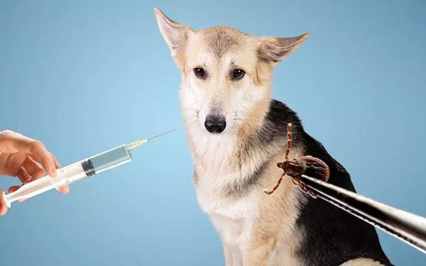 Tiêm thuốc trị ve chó có hại cho vật nuôi hay không?